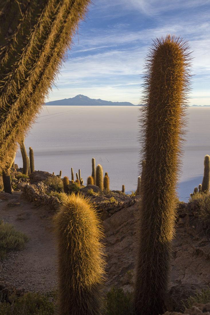 Uitzicht over Salar de Uyuni met cactussen ervoor.