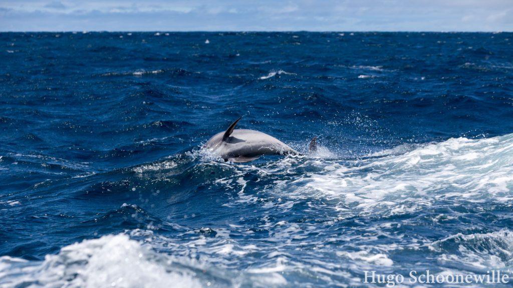 San Cristobal 360 dolfijnen