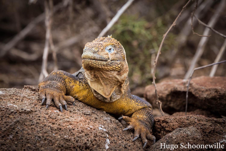 Kosten Galapagos