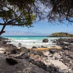 Hoeveel kosten de Galápagoseilanden zonder cruise?