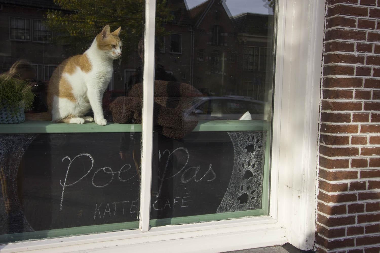 Kat voor het raam op een bord met daarop PoesPas Kattencafé in Leeuwarden