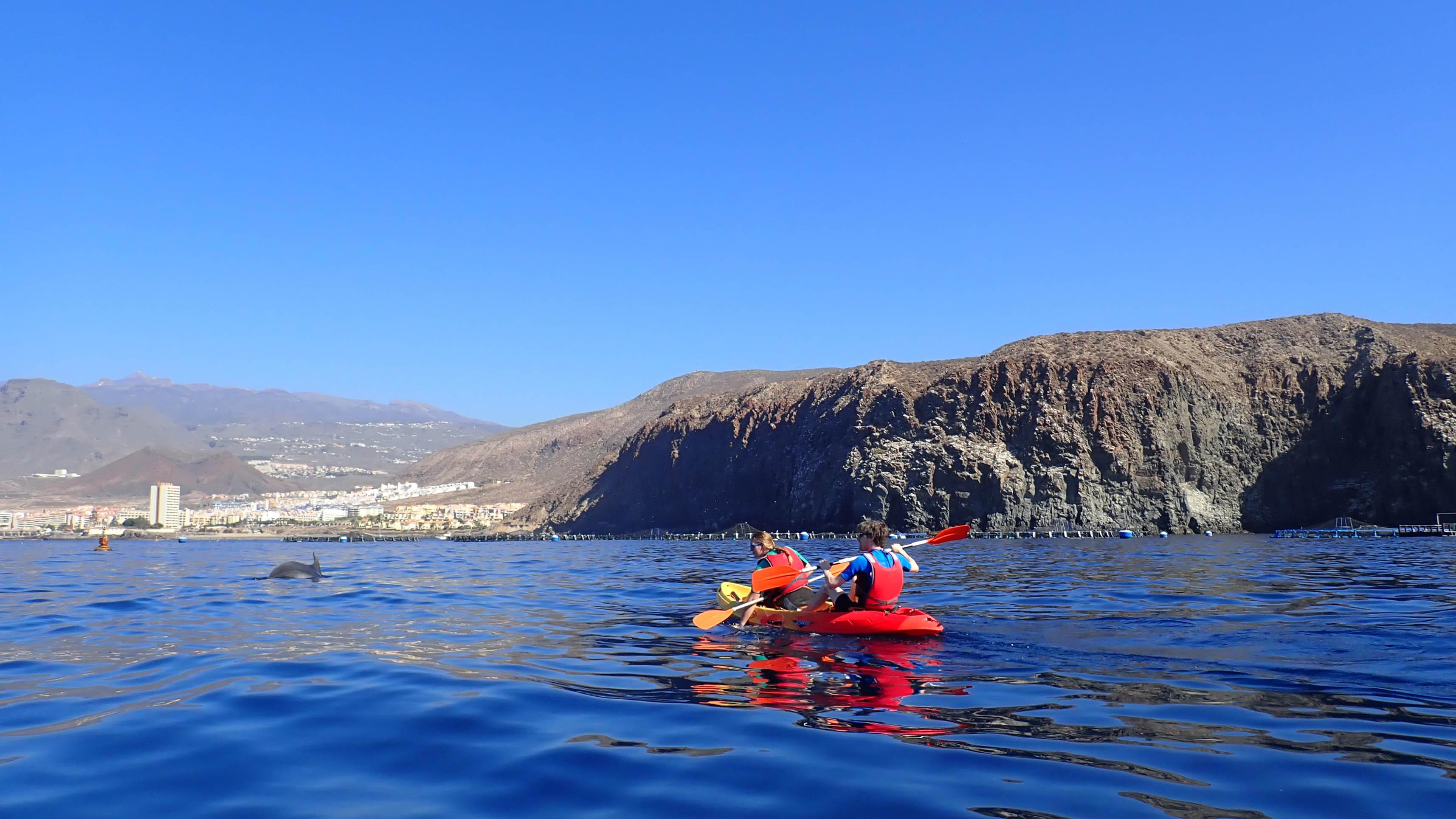 Kajakken met dolfijnen op Tenerife op de oceaan