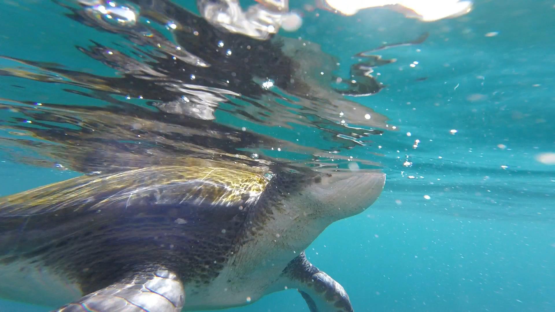 Zeeschildpad vlak voor de lens