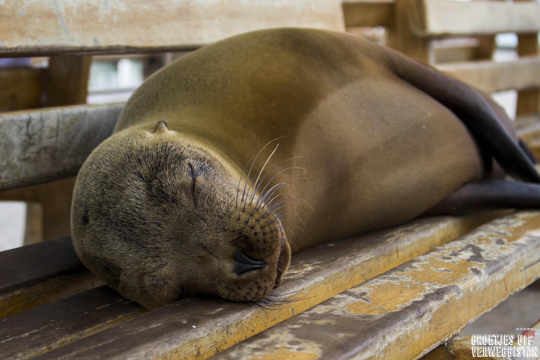 Galápagos: de complete gids voor Santa Cruz