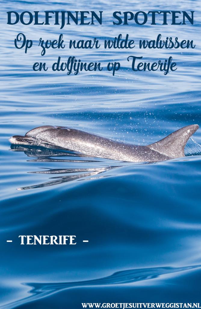 Gevlekte dolfijn in de Atlantische Oceaan tussen Tenerife en Gomera.