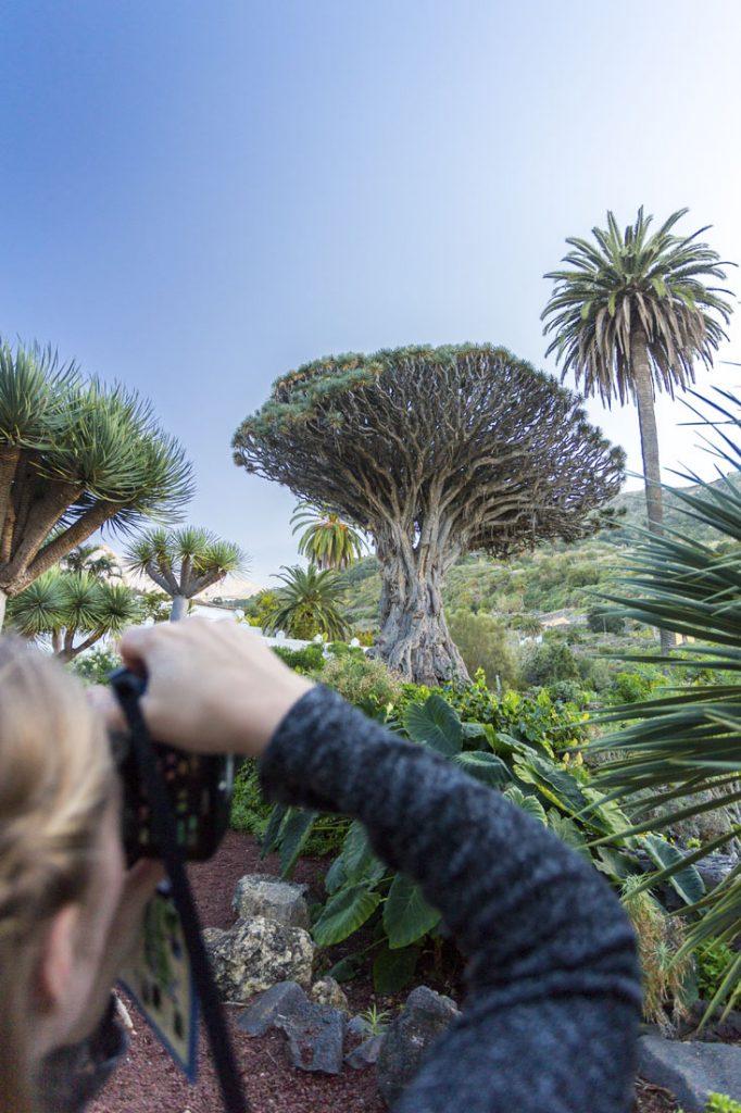 Manouk maakt foto van de drakenboom in Icod de los Vinos op Tenerife.