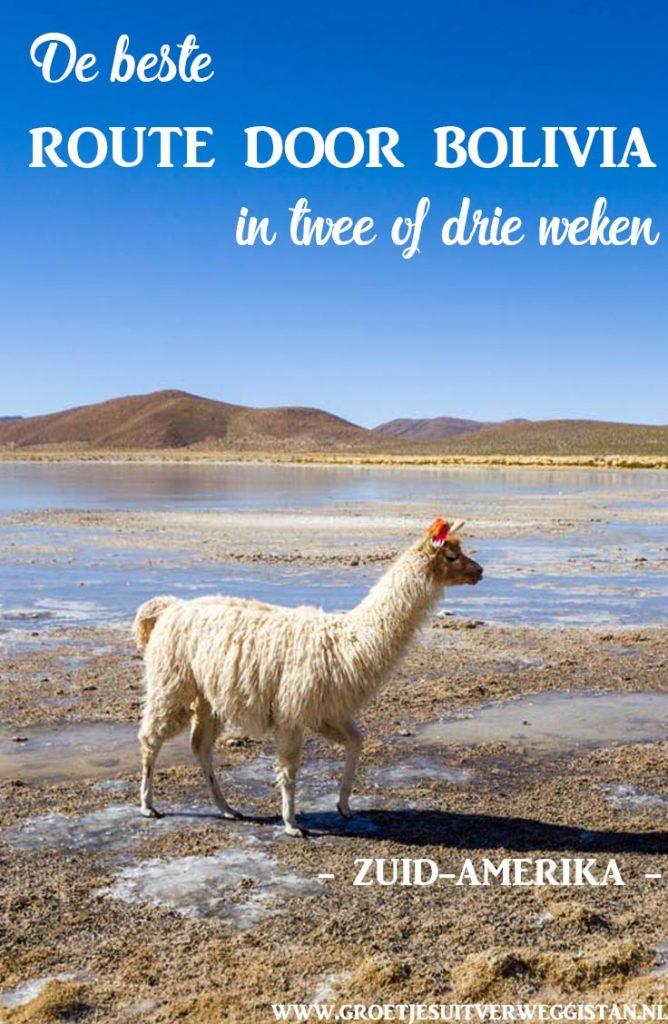 Alpaca in een drassig landschap in het nationale park rondom de zoutvlaktes van Uyuni in Bolivia.