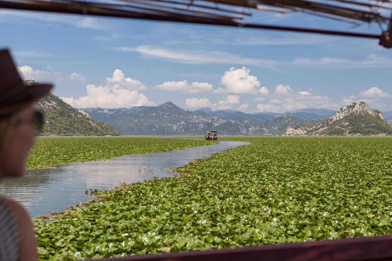 Manouk kijkt uit over het Skadarmeer in Montenegro met een zee van lelies.