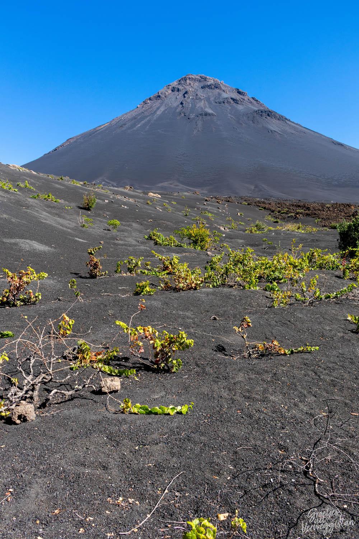 Zwart vulkaanlandschap met kleine groene plantjes bij de vulkaan op Fogo