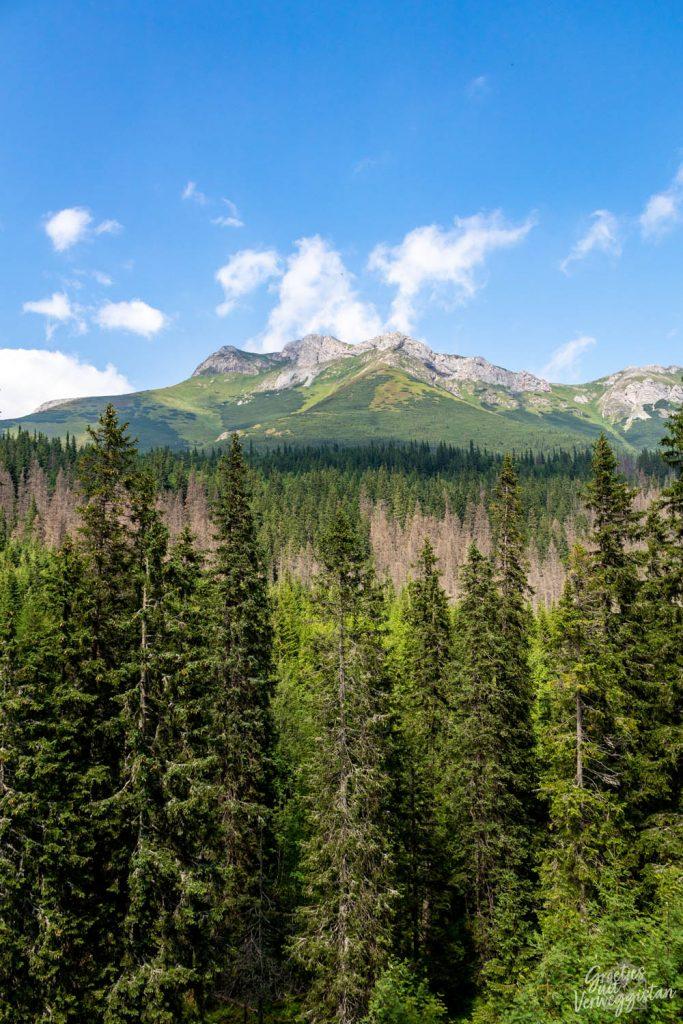 Uitzicht op het Tatragebergte met een naaldbomenbos ervoor.