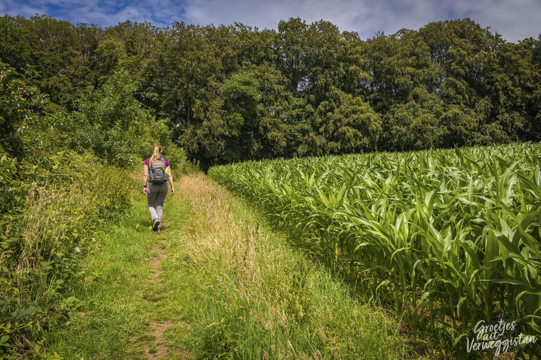 Manouk wandelt over gras langs de maïsvelden in Luxemburg.