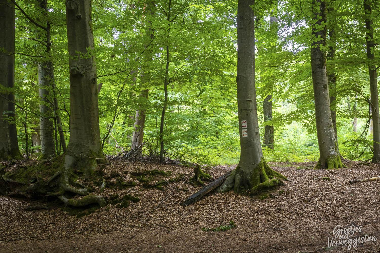 Bewegwijzering op de boom met een rode M in Luxemburg.