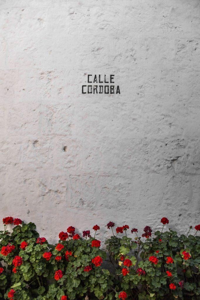 Witte muur met ervoor rode bloemen in het Santa Catalina klooster in Arequipa