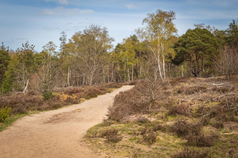 De heide en bomen van de Sallandse Heuvelrug met blauwe lucht