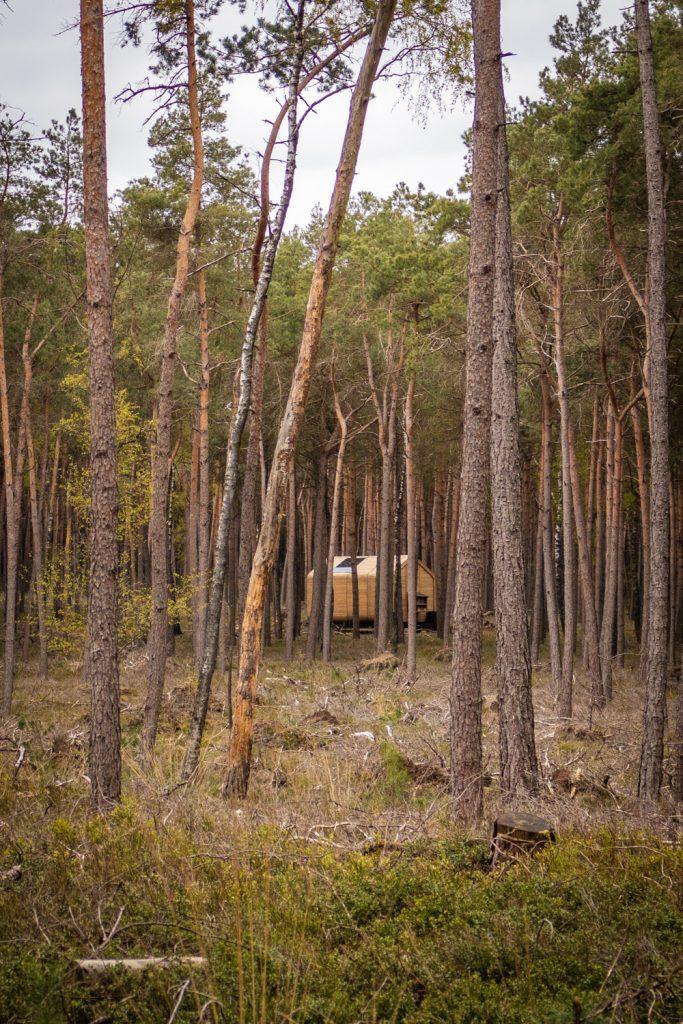 Houten cabin verscholen tussen de bomen